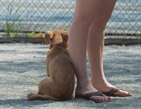 Dog. Newark Street Dog Park, Washington, DC