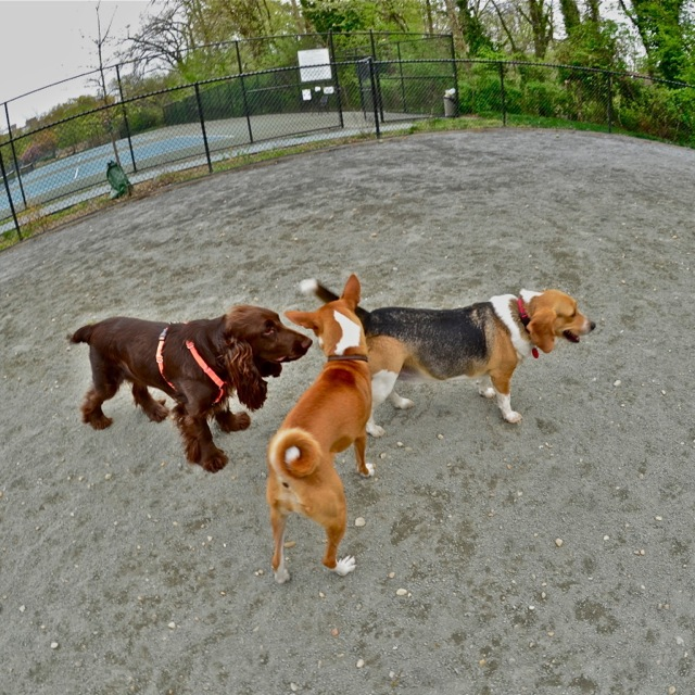 Newark Street Dog Park, Washington DC