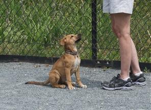 Good Dog. Newark Street Dog Park, Washington, DC.